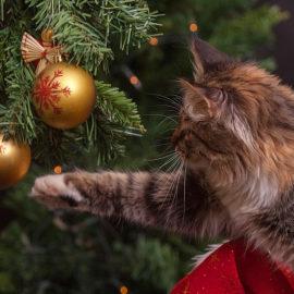 Noël éthique et chic